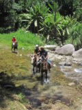 Horseback riding tours in La Ceiba