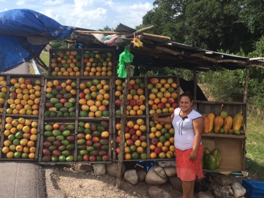 Beware its Mango Season in Honduras!