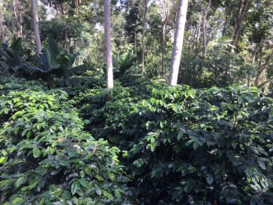 The Coffee Capital of Central America