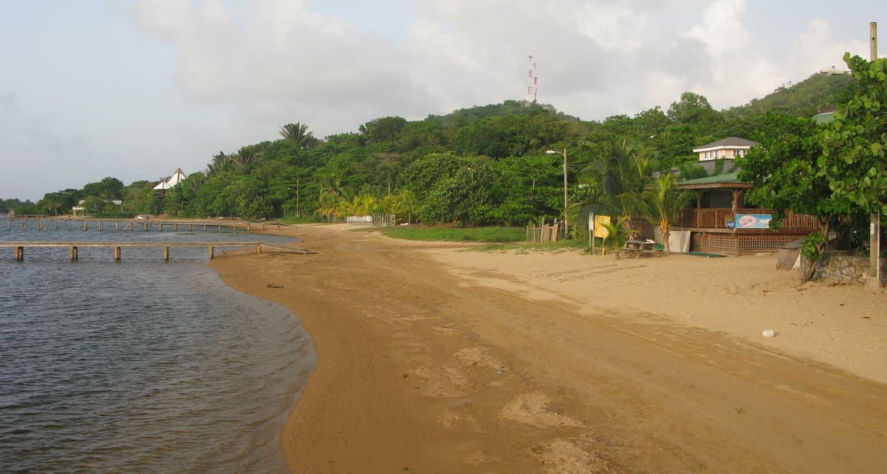 Jungle Bugs Versus Sand Flies