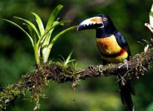 the story of birdwatching in Honduras