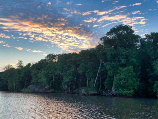 Touring the Mangroves in the Gulf of Fonseca