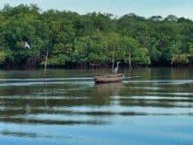 Birding in the gulf of Fonseca