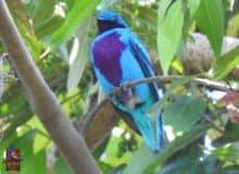 Birding festivals and events in Honduras