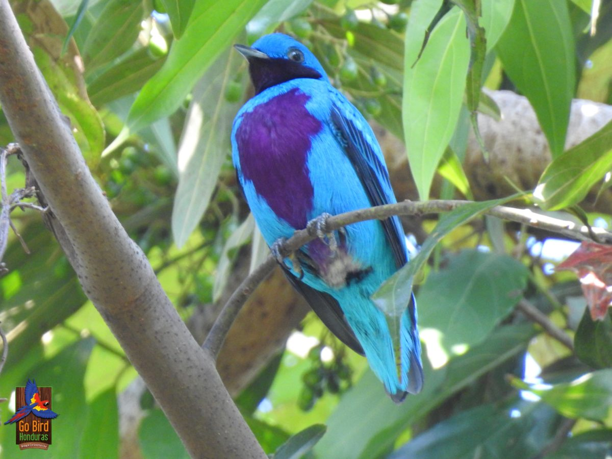 Birding festivals and events in Honduras