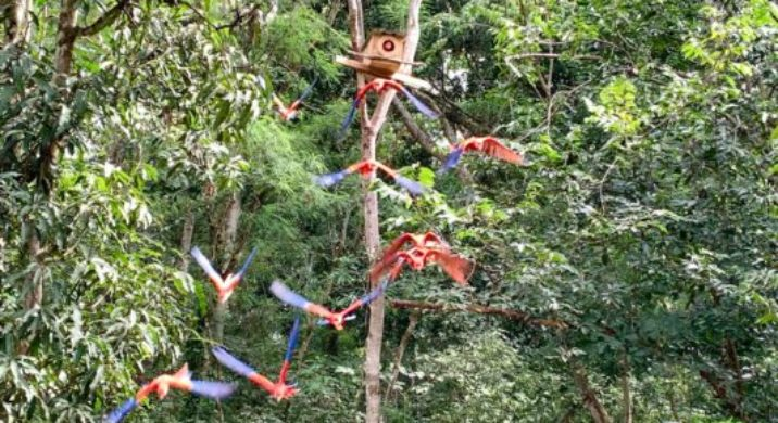Sacred Valley of the Scarlet Macaws